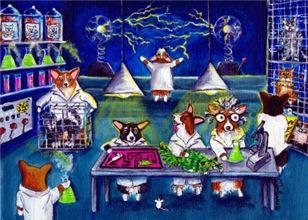 Mad Scientists Corgi Lab