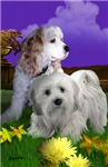 Missy & Rusty
