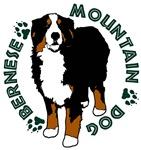 Standing Bernese Mountain Dog 02