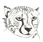 Cheetah in pen & ink
