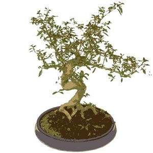Bonsai Graphic