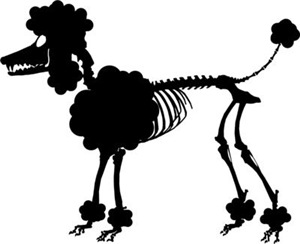 Poodle Skeleton