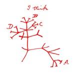 Darwin Tree of Life Red