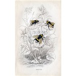 Vintage Bumble Bees