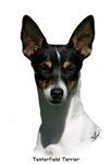 Tenterfield Terrier 9Y394D-072