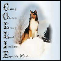 Collie Is...