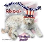 Yankee Goldendoodle Dandy