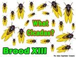 What Cicadas?