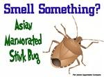 Smell Something? Stink Bug