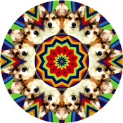 Corgi Kaleidoscopes