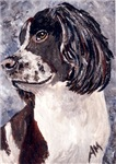 DOGS - ENGLISH SETTER SPRINGER SPANIEL