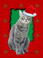 Egyptian Mau Christmas