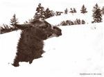 Llama in snow