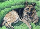 Hatcher Jack, the german shepherd
