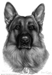 Rikko, K9 Officer, German Shepherd
