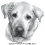 Alex, Labrador Retriever