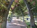Brisbane Archway
