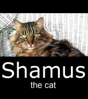 Shamus-the cat