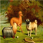 Yorkshire Terrier, Greyhound & Pug 1880 Digitally