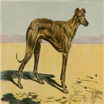 Arab Greyhound P. Mahler 1907 Digitally Remastered