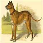 Great Dane 1890 Digitally Remastered