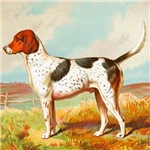 Foxhound Cassell 1881 Digitally Remastered