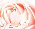 Urdu Love Rose