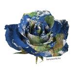 Earth Rose