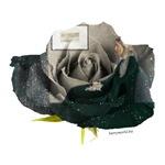 Whistler's Rose