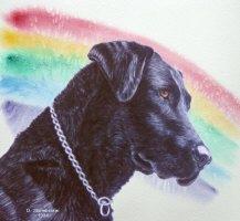 Rainbow Bridge Black Labrador