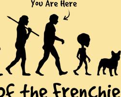 Frenchie Evolution