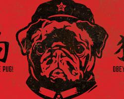 Black Pug Chairman