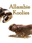 Allambie Koolies