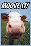 Moove It Cow