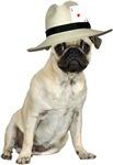 Poker Pug
