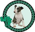 Irish Bull Terrier