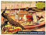Sells Brothers Circus Sacred Zebu
