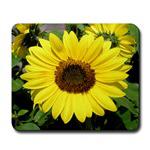 ...Sunflower 01...