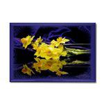 ...Narcissus 01...