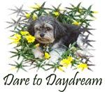 Dare to Daydream, Dream Dog Gifts