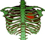 Green Bones, Rib Cage T-Shirts & Gifts!
