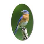 Bluebird Stickers, Magnets & Buttons