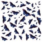 Blue & Purple Wing Butterflies