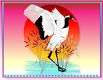 Birds-all kinds