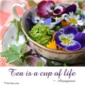 Cup of Life