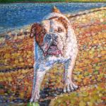 Bull Dog Samson