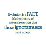 Evolution - Apparel