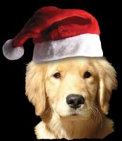 Christmas Santa Golden Retriever