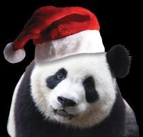 Santa Panda Bear