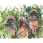 Burrowing Owls #2